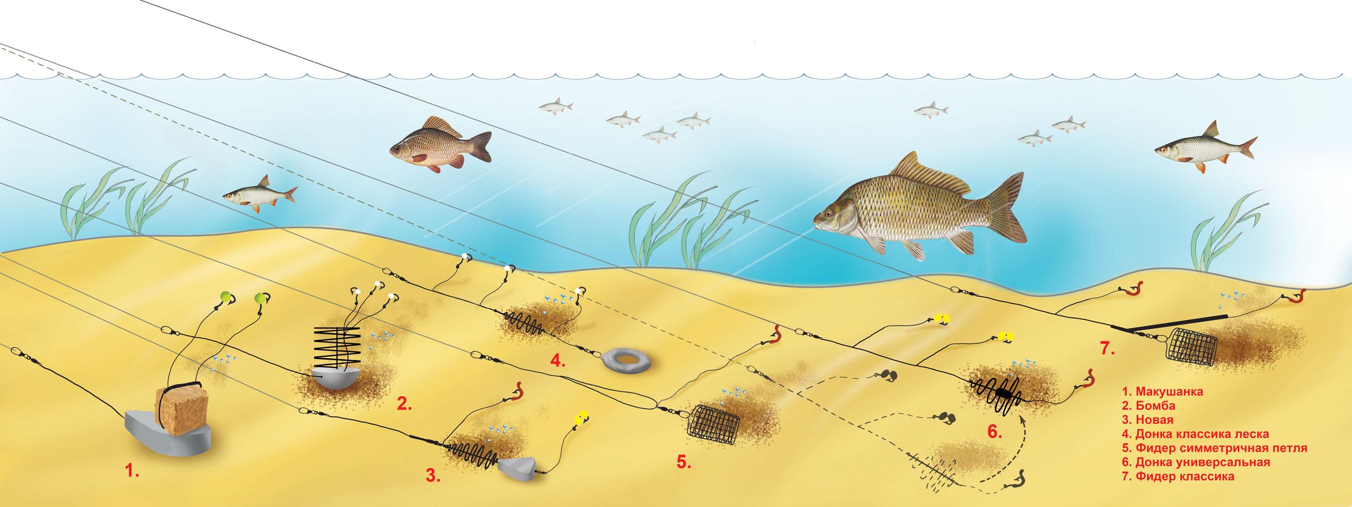 Как сделать перемет и ловить рыбу, не нарушая закон? 12